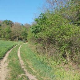 Na predaj pozemok 703 m2 ,Krškany , Levice. Pozemok sa nachádza cca 1 km od obce na kopci v lese .Prístup je po spevnenej ceste. Na pozemku je ...