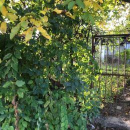 Na predaj záhradu situovanú vo výbornej lokalite Bratislava III-Nové Mesto. Záhrada sa nachádza na Pionierskej ulici. Výmera záhrady je 278 m2 + ...