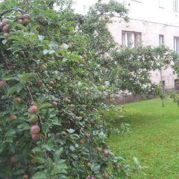 Ponúkam na predaj samostatný byt v rodinného domu v lukratívnej lokalite v centre mesta Prešov, ktorý je zároveň v tichom prostredí.Dom má spoločné ...